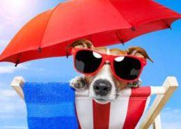 cane-in-spiaggia-in-48390921